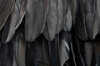 Black swan feathers texture background