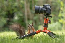 Eichhörnchen Auf Stativ