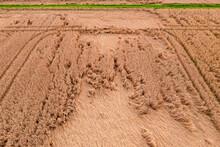 Luftabild Von Einem Durch Starkregen Gezeichneten Getreidefeld Mit Spuren Eines Traktors Und Grünem Feldweg