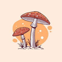 Amanita Muscaria, Fly Agaric Mushroom Vintage Style Drawing Vector Illustration