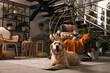Beautiful Golden Retriever dog resting near hanging chair on indoor terrace