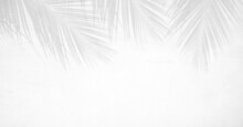 Shadow Of Palm Leaves On White Cement Wall Background