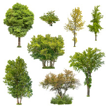 Set Of Deciduous Trees Isolated On White Background. Cut Out Green Tree. High Quality Clipping Mask For Professional Composition.