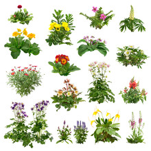 Set Of Flowers Isolated On White Background. Cutout Plants For Garden Design Or Landscaping. High Quality Clipping Mask For Professionnal Composition. Flower Bed.
