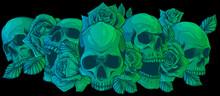 Vector Illustration Skulls With Roses On Black Background