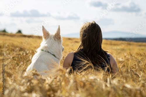 Fototapeta woman and dog white swiss shepherd sitting backwards in the field of wheat