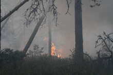 Intense Flames From A Massive Forest Fire