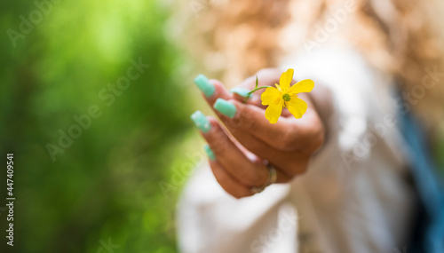 Obraz na plátně Close up of yellow spring flower and woman caucasian hand holding it - nature an