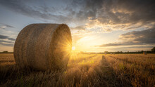 A Harvested Wheat Field With Bales Of Straw And The Beaming Light Of The Evening Sun