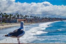 Möwe Blickt Auf Bucht & Strand