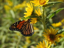 Bees, Butterflies And More