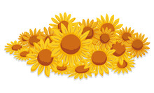 Isolated Bunch Of Yellow Daisies And Orange Center, Vector Illustration