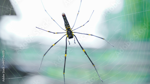 Fotografia Close up macro shot of a Asia garden spider  sitting in a spider web