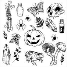 Set Of Vector Drawings On The Theme Of Halloween. Black And White Graphic Drawings In Vintage Style. Witchcraft, Magic, Spirituality. Skull, Crystal, Mushrooms, Frog, Potions, Spiders And Bones