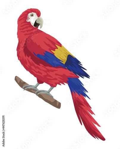 Fotografering parrot exotic bird