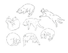 Funny Cat Sleep Position Line Drawing