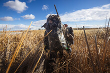 Rear View Of A Man Walking Through Reeds While Duck Hunting, USA