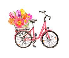Pink Bicycle, Tulip Flowers In Basket. Watercolor