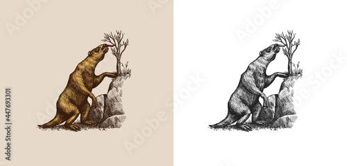 Fotografia, Obraz Ground sloth or Megatheriidae