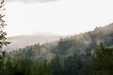 Fototapeta  - Krajobraz leśny wierzchołki drzew las we mgle panorama