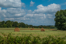 Rolled Hay Bales In A Field