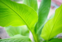 Close Up Of Vibrate Green Leaf With Blur Background
