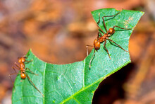 Butterfly, Tropical Rainforest, Marino Ballena National Park, Uvita De Osa, Puntarenas, Costa Rica, Central America, America