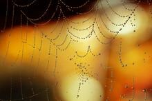 Dewed Spider Web On A Blurred Orange And Black Background. Decor And Halloween Preparation