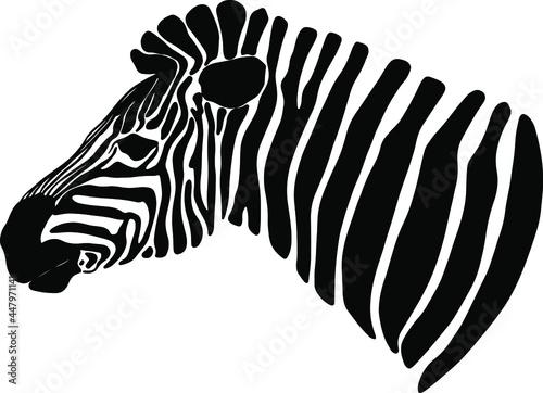 Fotografie, Obraz drawing of a zebra head