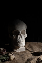 Photo Still Life With A Skull And Flowers