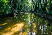 Forest River With Yellow Sandy Bottom