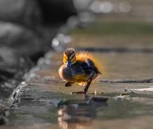 Little Duck / Kleines Entlein