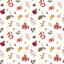 Fall Leaves, Berries, Plants Seamless Pattern. Watercolor Autumn Botanical Print. Natural Artistic Wallpaper With White Background.