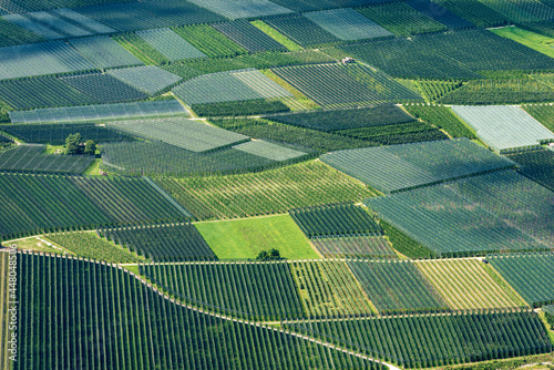 Canvas Print Aerial view of many apple orchards with anti-hail netting in summer in Valsugana or Sugana Valley, in the plain between Lake Caldonazzo and Lake Levico, Trento Province, Trentino Alto Adige, Italy