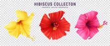 Realistic Hibiscus Set