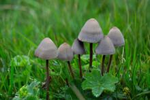Mushrooms Flora Plant Nature Herb