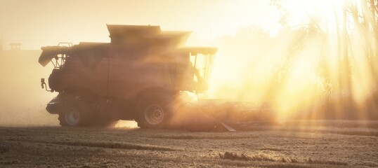 Harvester (combine) working in the country agricultural field at sunset. Dust, haze, golden sunlight. Latvia. Farm, industry, organic and alternative production, environmental damage and conservation