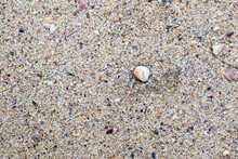 Sand Beach Texture Focused In One Marine Shell Surrounded By Many Little Shell Fragments And Sand Grains.