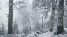 Winter In Harz