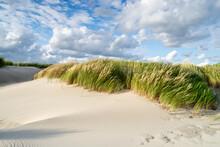 Dune Grass On The Beach Near The North Sea Coast, Germany