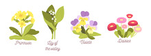 Set Spring Flowers, Bloom Garden Or Forest Blossoms Primrose, Lilly Of The Valley, Violets And Daisies, Natural Plants