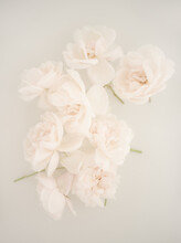 White Pink Roses Floating In Milky Water