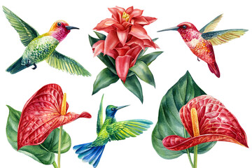 Tropical flowers and hummingbird birds on isolated white background, watercolor illustration