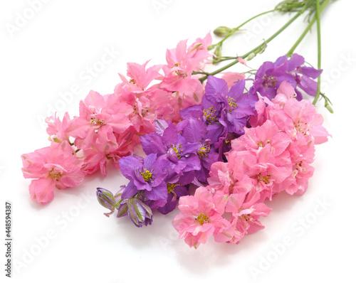 Fotografie, Obraz Delphinium flowers isolated.