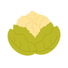 Cauliflower Cabbage Vegetable Fresh Veg Product, Organic Food Production Vector Illustration. Cartoon Healthy Raw Cauliflower Cabbage From Farm Agriculture Market Isolated On White