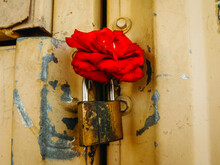 Red Rose Resting On Top Of A Yellow Padlock Against Yellow Metal Door Frame