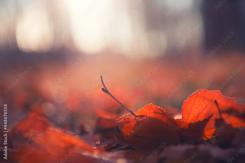 Red autumn leaves in a forest at sunset. Macro image, shallow depth of field. Beautiful autumn nature background