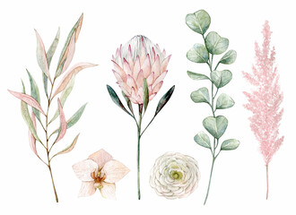 Watercolor illustration set with pampas grass, orchid, protea, eucalyptus, ranunculus. Isolated on white background. Hand drawn clipart. Perfect for card, postcard, tags, invitation, printing.