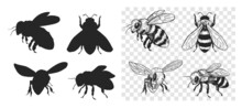 Sketch Of A Bee. Vector Illustration On Transparent Background
