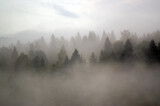 Fototapeta Na ścianę - Las we mgle krajobraz